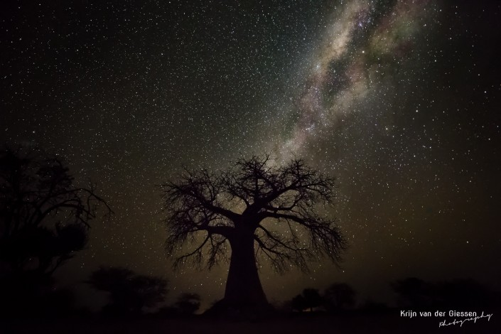 Baobab silhouette against a sky full of stars and bright milky way Botswana copyright krijn van der Giessen Photography