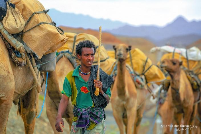 Camel Caravan Danakil Depression copyright by Krijn van der Giessen Photography