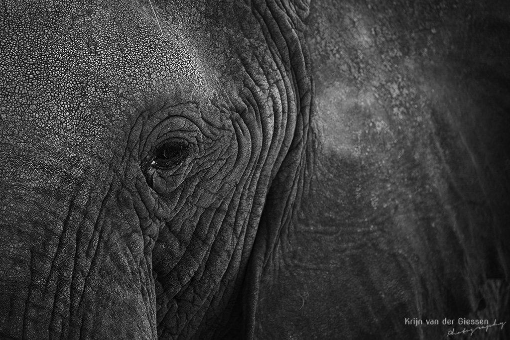Close-up elephant eye in black & white bw in Botswana - captured during a Krijn van der Giessen Photography Photo Tour