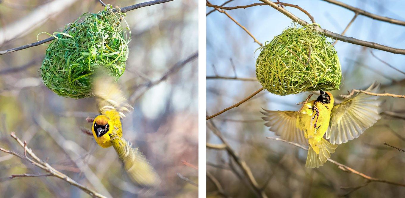 Short shutterspeed vs long Shutter Speed birds