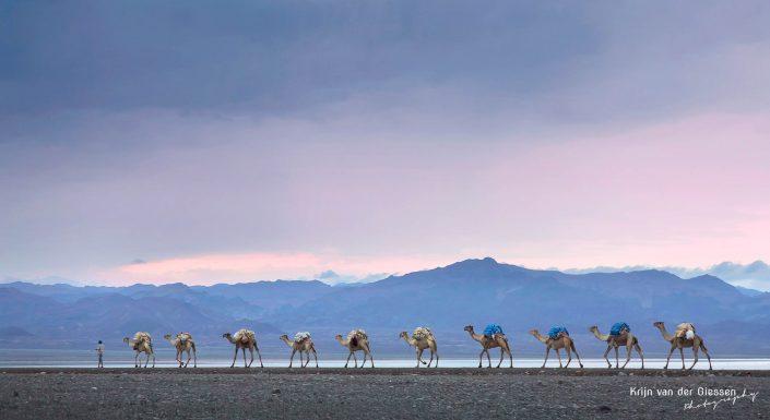 Danakil Depression Camel Caravan Dalol Krijn van der Giessen Photography Copyright-9