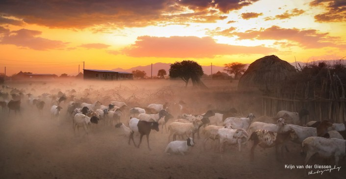 Sheep return home in mist of dust in Ethiopia copyright by Krijn van der Giessen Photography
