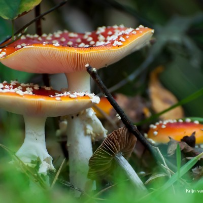 9 tips for photographing mushrooms in Autumn
