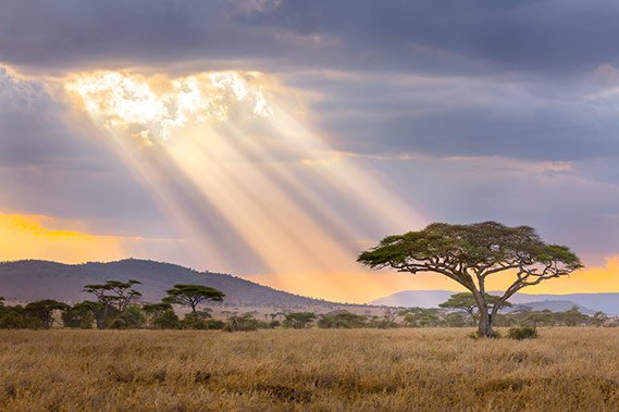 Sunrays Serengeti NP - Krijn van der Giessen Photography Tanzania Photo Tour