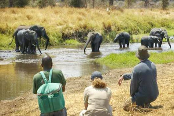 Walking photo safari spotting elephants