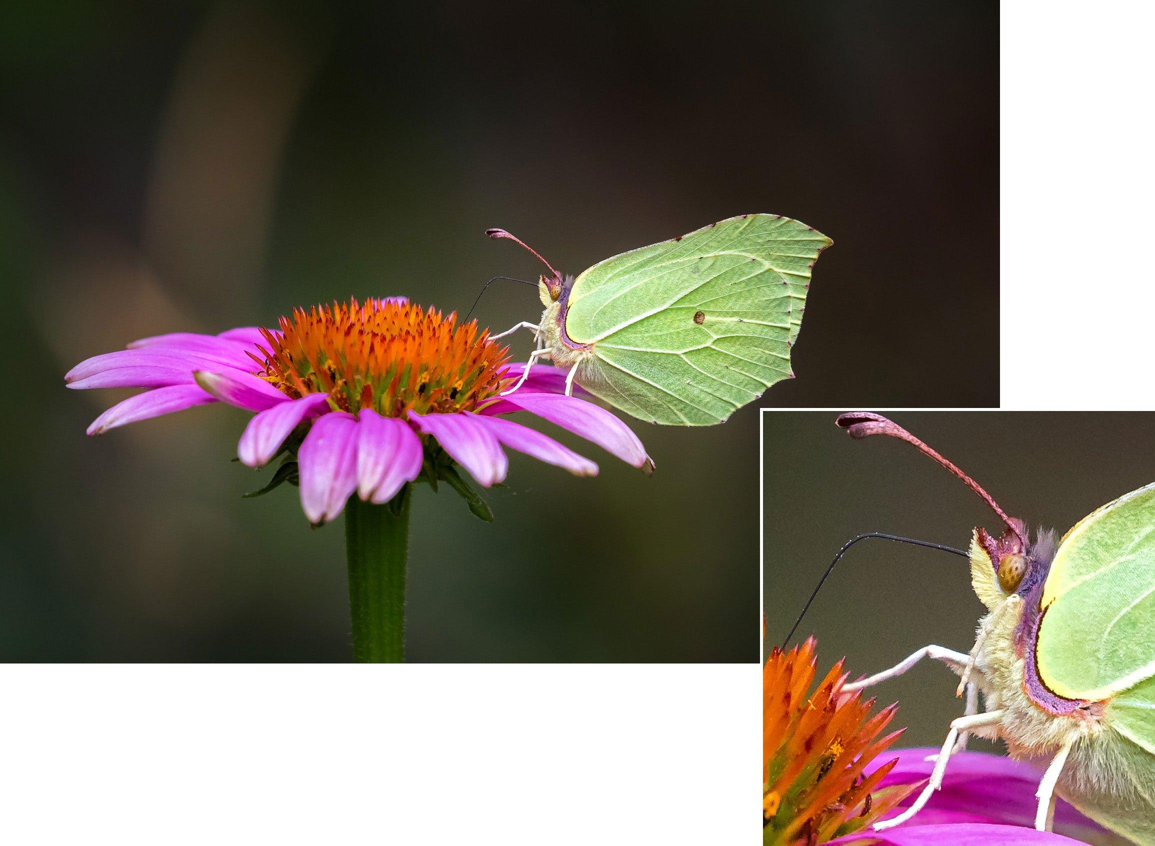 MAcro vlinder voorbeeld 1