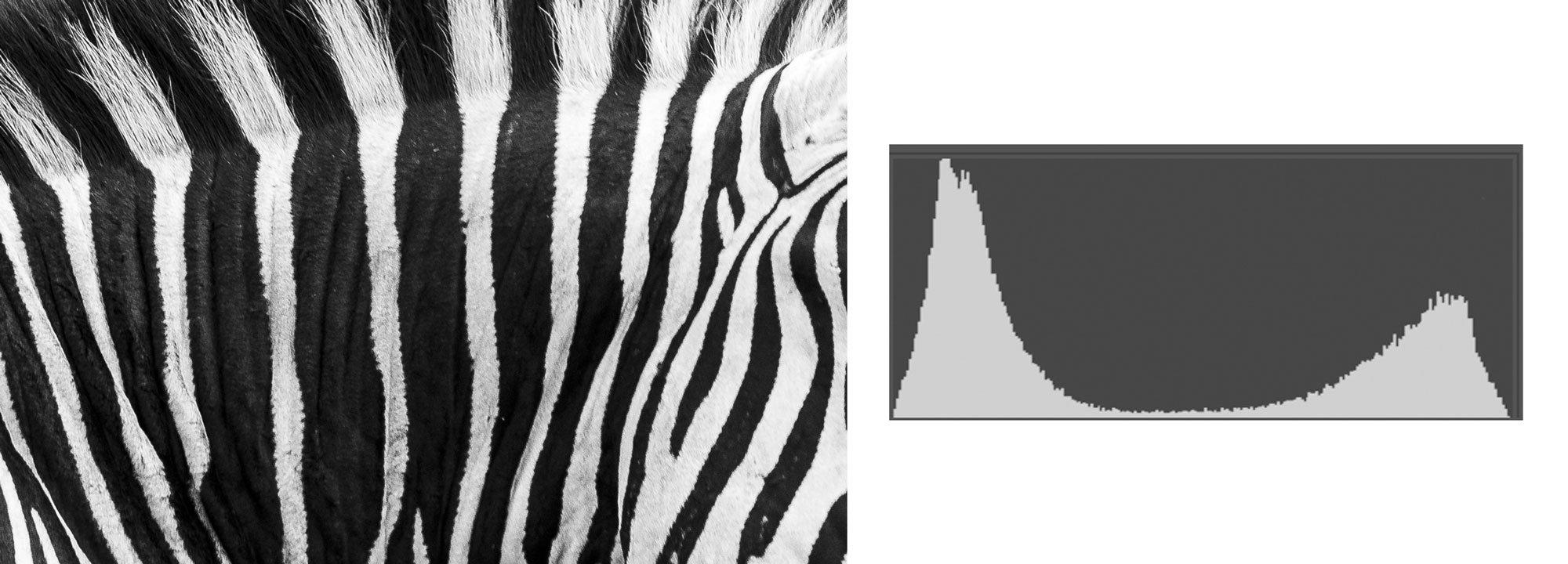 Zebra skin and histogram