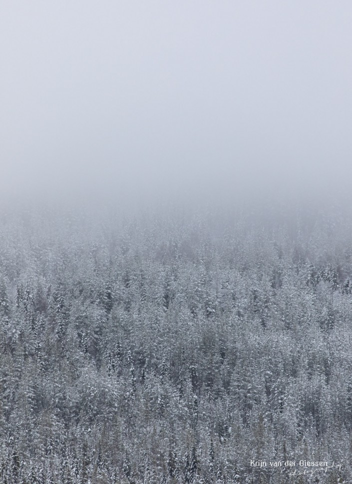 Snow forest in fog and clouds in Sweden Lapland Copyright by Krijn van der Giessen Photography