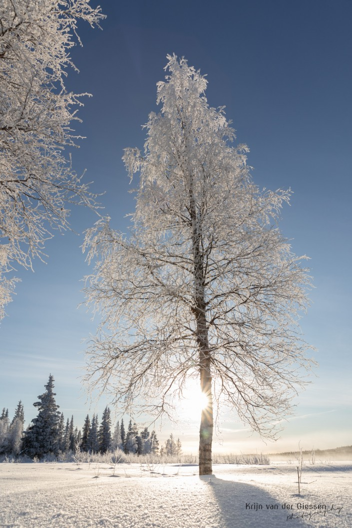 Tree covered in frost in snowy landscape copyright by krijn van der Giessen Photography