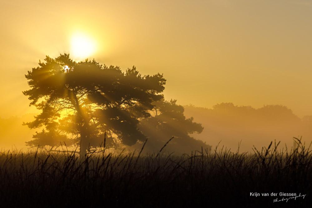 Mistige zonsopkomst met boom in Drenthe