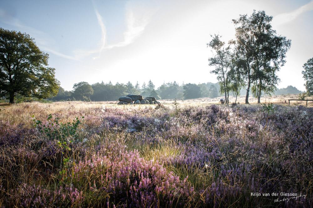 Hunebed in bloeiende heide Holtingerveld op sprookjesachtige ochtend