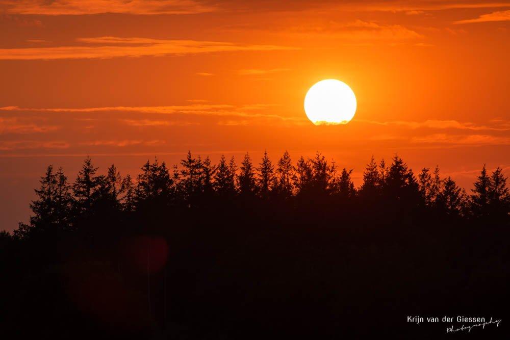 Zonsondergang boven naaldbomen in Drenthe