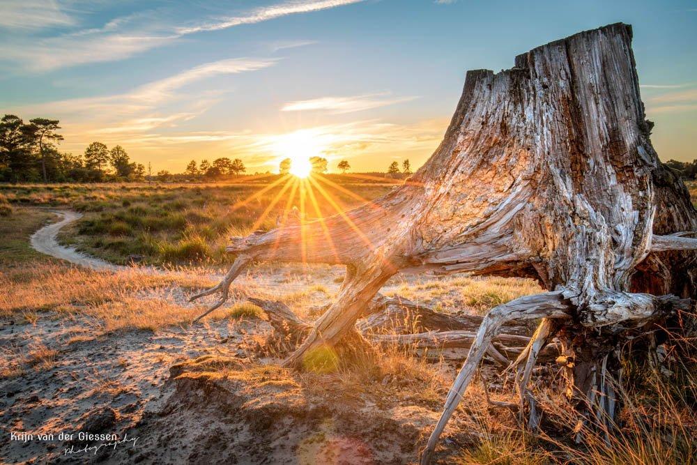 Zonsondergang Aekingerzand voor boomstam in Drenthe
