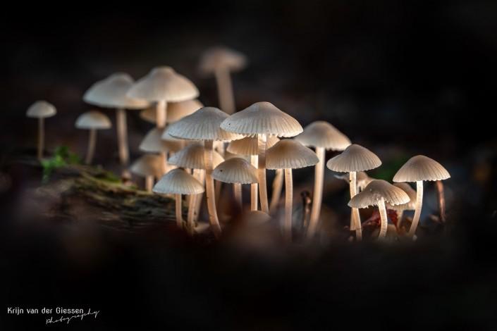 Groepje verlichte paddenstoelen Krijn van der Giessen Photography